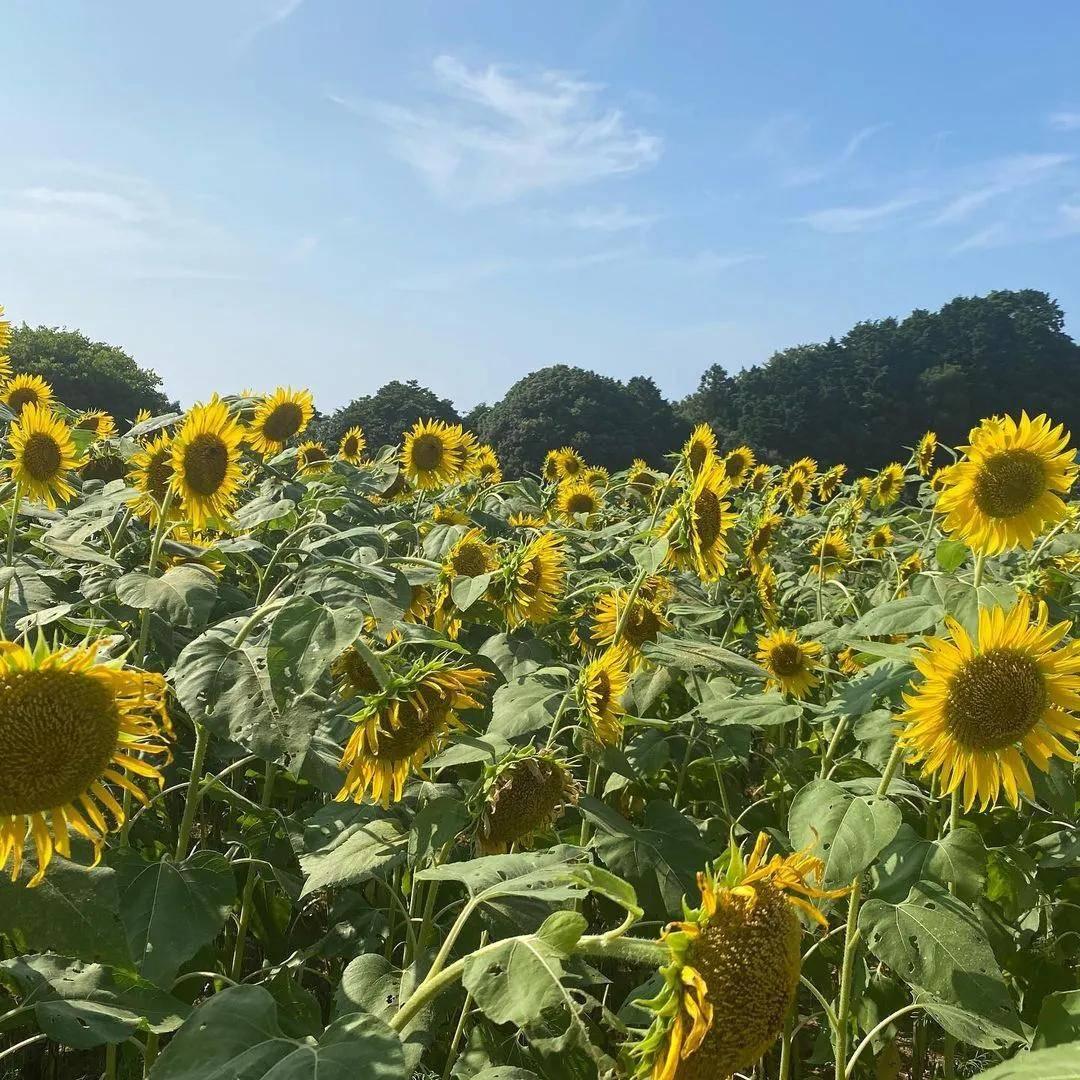 日本九州必打卡景点,快加入你的旅行清单!