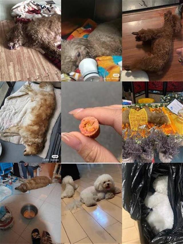 7条宠物犬被陆续下毒,看着狗狗