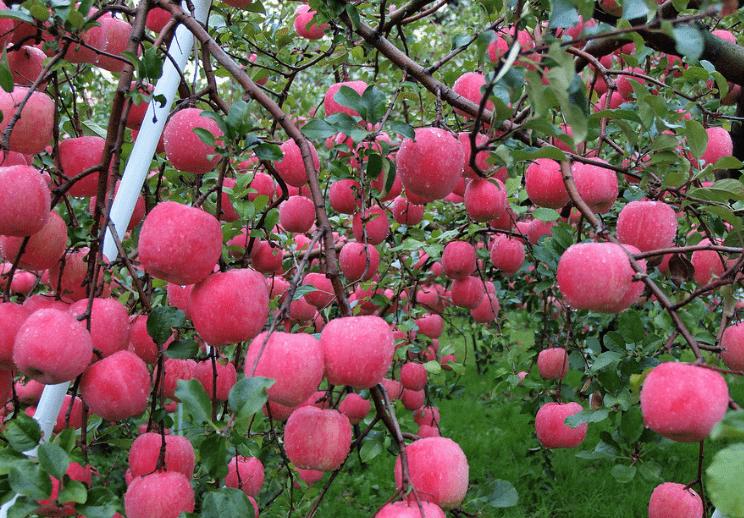 心理测试:渴了一天,你最想摘哪个水果吃?测你今生注定是哪种人  第2张