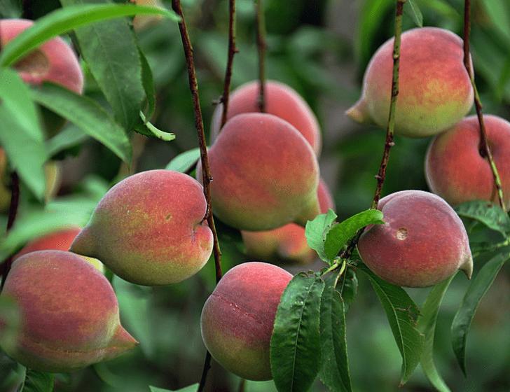心理测试:渴了一天,你最想摘哪个水果吃?测你今生注定是哪种人  第3张