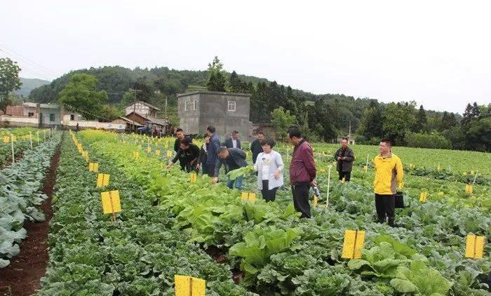 贵州省农科院园艺所在威宁实施的科技项目显成效