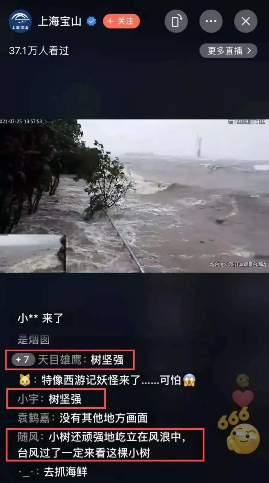 """台风""""烟花""""逼近上海,上海宝山这棵""""树坚强""""火了!"""