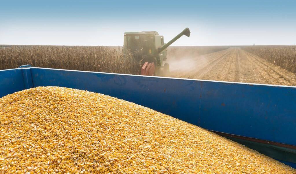玉米进口关税取消,玉米价格掉头向下,秋季玉米能否卖出高价?csl