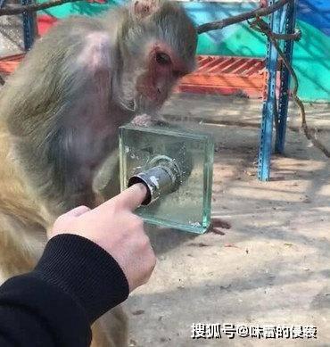 游客拿食物喂猴宝宝,却被猴妈捷足先登,猴宝你是充话费送的吧