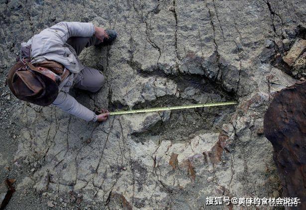 原创             关于恐龙化石的4个问题,你了解多少?