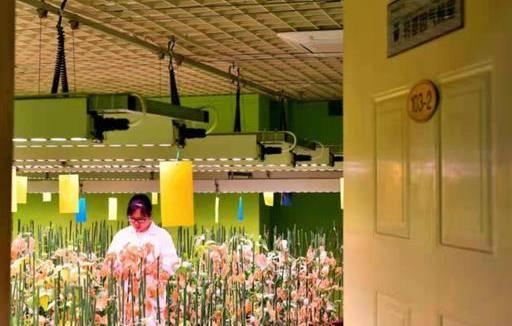 """""""曾子故里""""的新使命:为国家研发更多大豆""""芯片"""""""