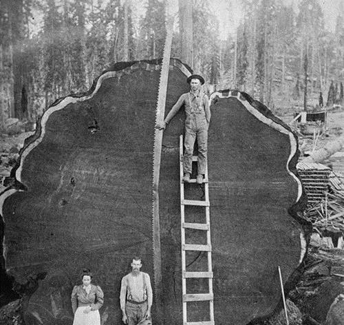 35张活久未见的照片,意大利的大树倒着长,根在棚顶上