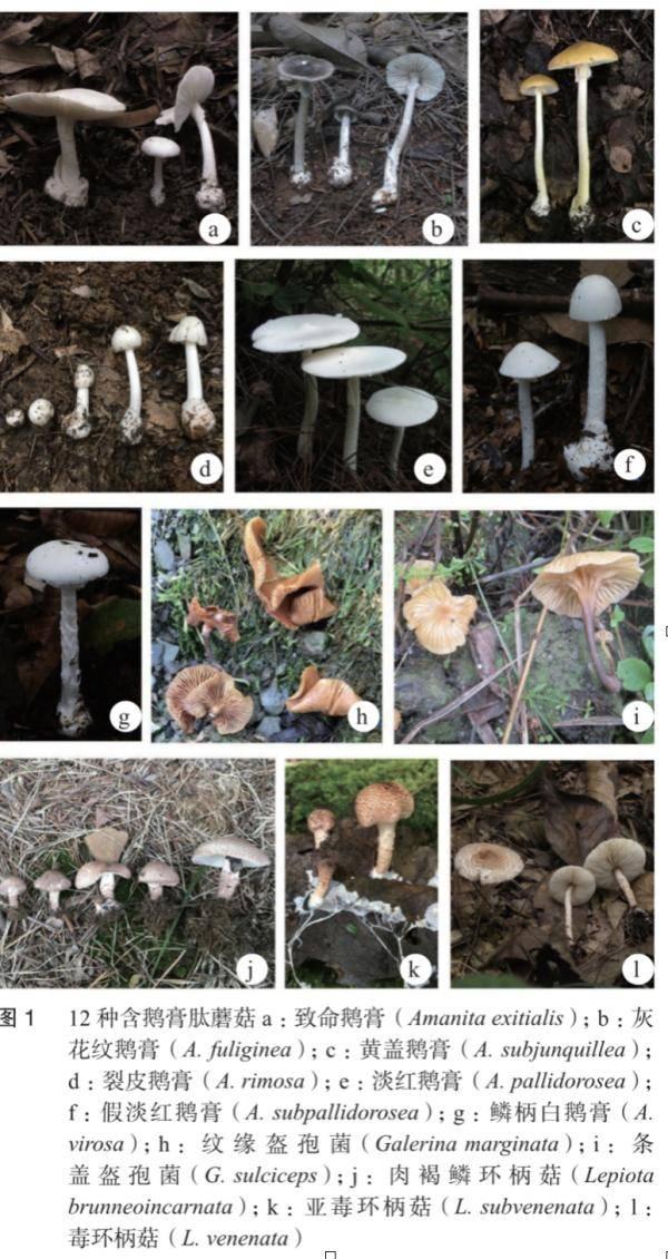 路边野蘑菇不要采!预防中毒只有这一招……
