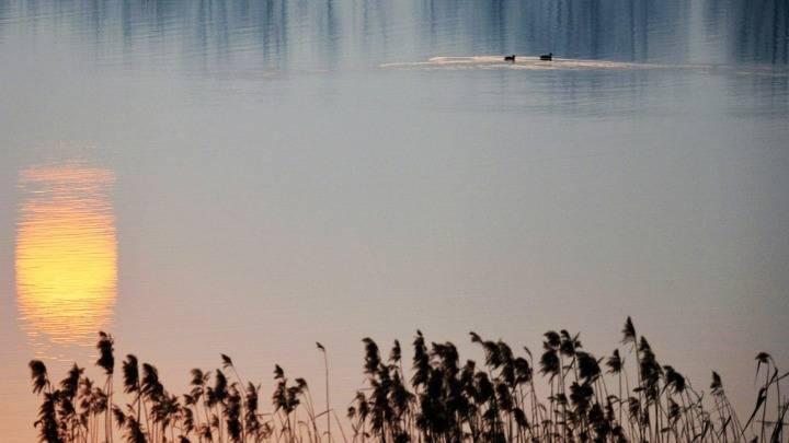 安徽六安:生态湿地 鸟类家园