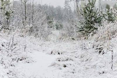大雪又纷飞,愿亲朋至,愿友人归