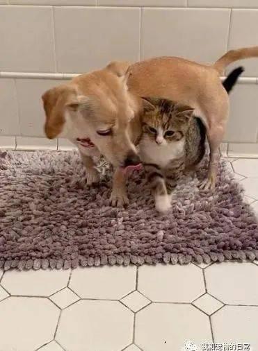 发现一对猫兄妹非常怕人,只有这只狗狗能让它们卸下心防.....