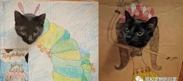主人的绘画天分,成功的让爱猫成为百变怪!