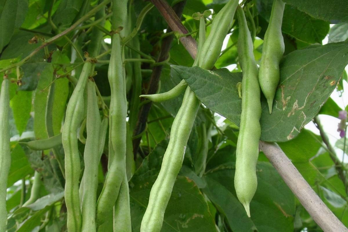 市场上卖的4种蔬菜 吃一口伤一次肝  最护肝养肝的10种蔬菜