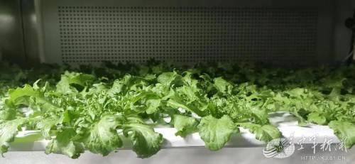 凤凰平台开户官兵根基上吃不到新鲜蔬菜