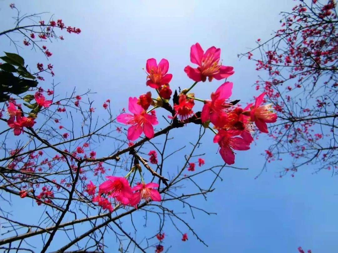 出游丨春暖花开,就来五彩田园采摘玩耍吧!