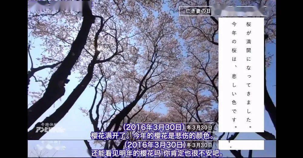 """日本「漂亮主妇」被""""折磨""""168小时死去,生前9篇日记曝光:比起死亡,更可怕的是他..."""