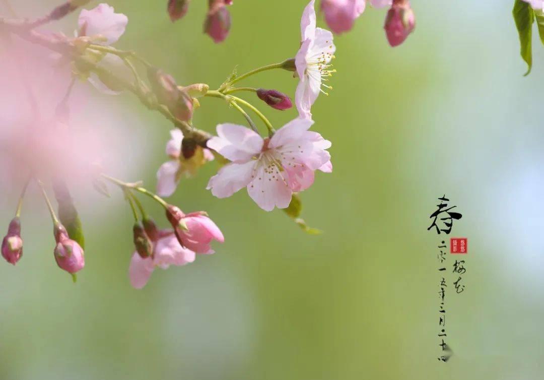 林笔顺 文 春天的脚步