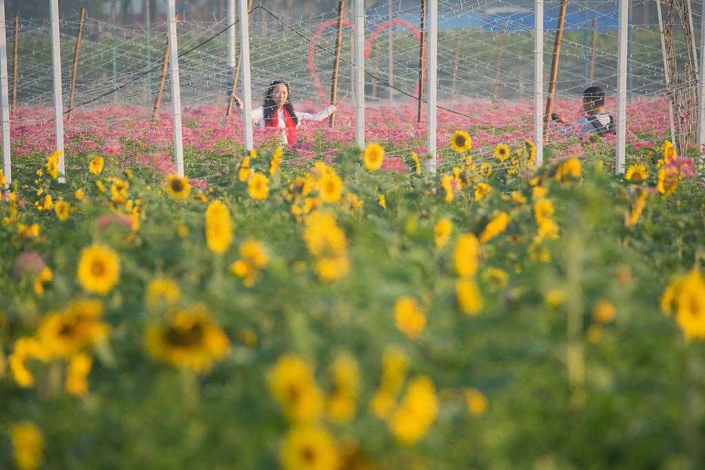 海南琼海:田园春色醉游人