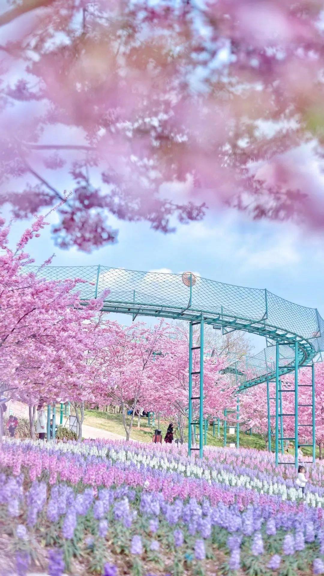 成都周末赏春花图鉴出炉,老夫的少女心啊!