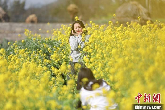 贵州兴义万峰林油菜花开引游客