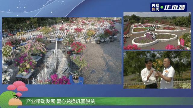 """约会春天!央视邀你来海口""""云""""赏花!"""