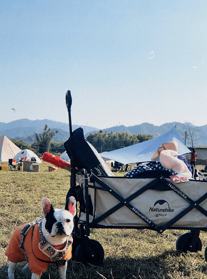 """【会玩】春天带上毛孩子去""""撒野"""",国内这些爱宠营地真的太棒了"""
