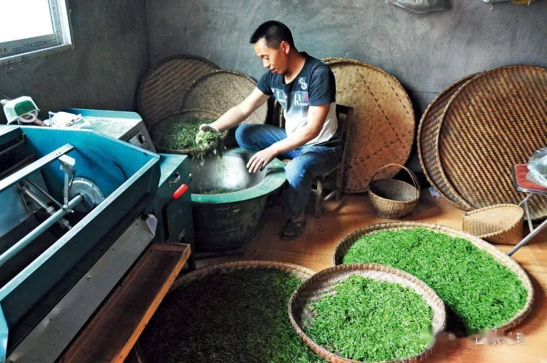 一盏春茶,中国人的繁华