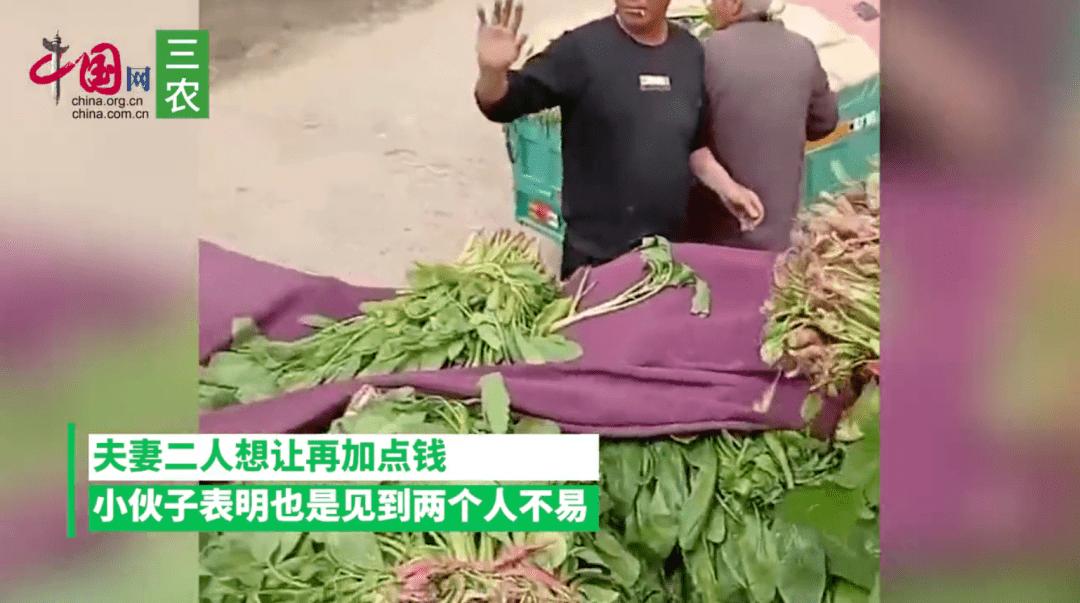 农民卖菠菜,1300斤15元,菜贩:行情就这样,没办法  第4张