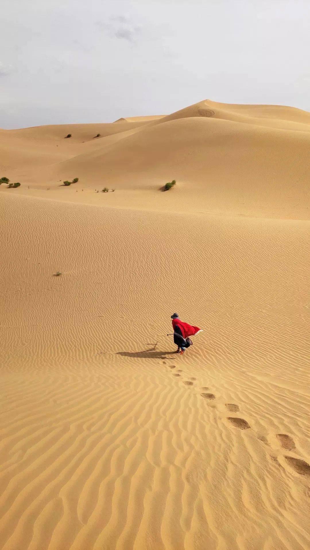 穿书还能抢救一下沙漠黄云 每次都死在男主怀里