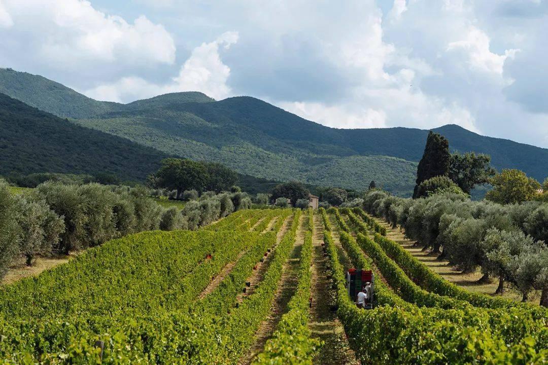 直播 | 完美阐释天、地、人的意大利名庄—奥纳亚庄园