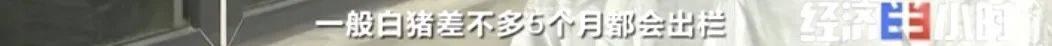 """8个品种本土种猪灭绝!我们餐桌多为""""外来猪""""?!本土""""二师兄""""去哪了?  第18张"""