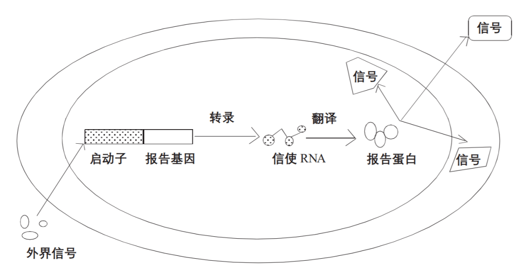比较菌种选育各方法的原理_菌种选育思维导图