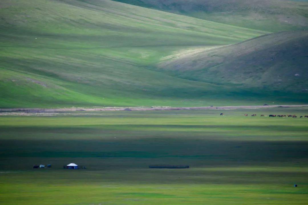 呼伦贝尔草原牧草已全部返青 较往年偏早5至9天