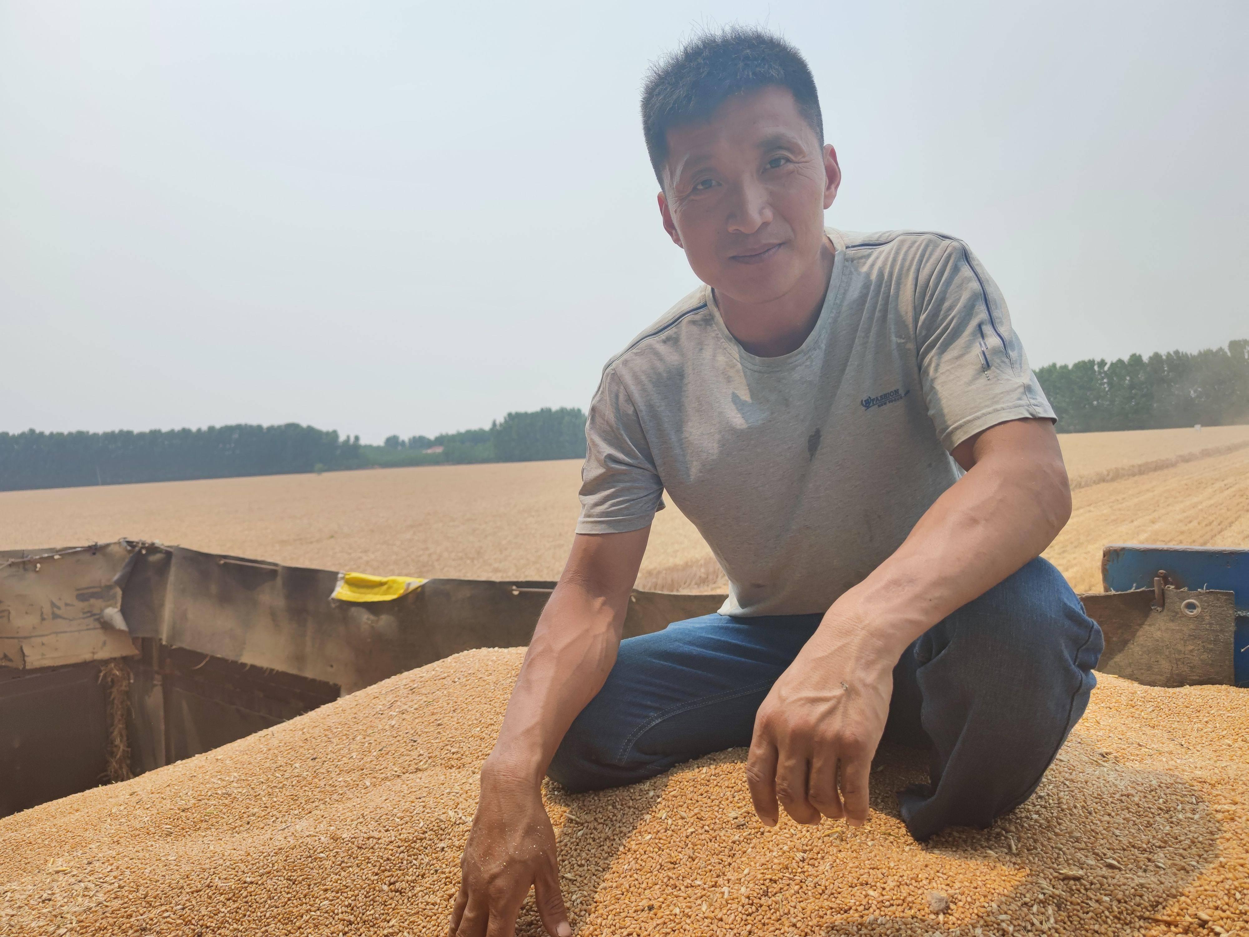 麦收直击丨曾经的八百里梁山泊 如今是阡陌纵横的麦田