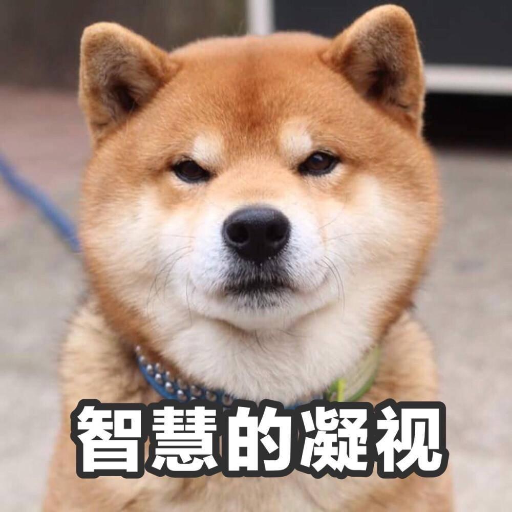体育肌肉犬王硕 《掏不空的肌肉狗》
