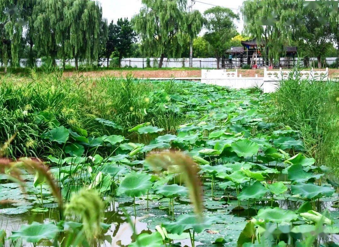 9月开放迎客!副中心新添3.2公里超美亲水绿廊!最新实