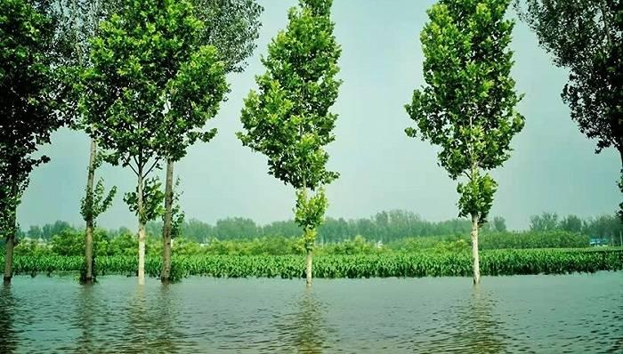 农业农村部:河南洪涝对粮食生产供给全局影响较为有限