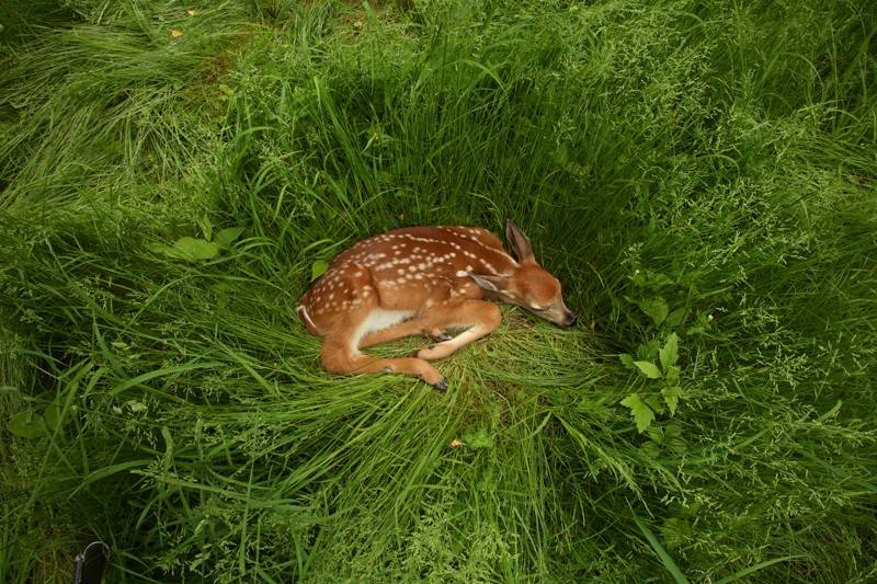 美国野生鹿群被检出大规模感染新冠病毒!样本系去年初采集