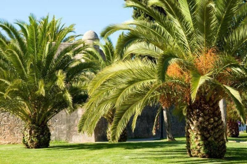 因气候变化问题加剧,棕榈树在迈阿密越来越不受欢迎